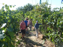 Harvest in Cappannelle