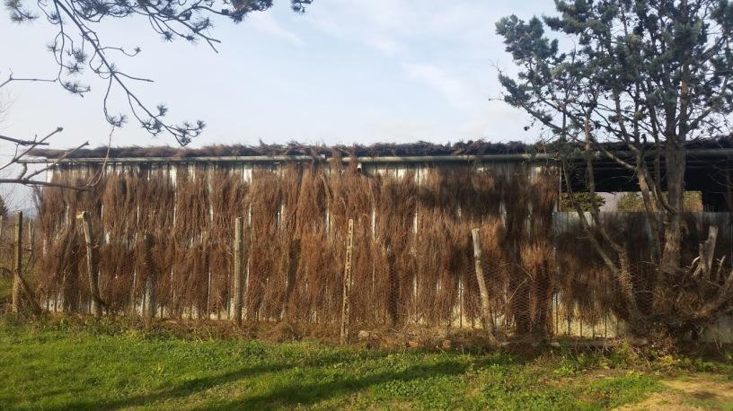 Hut Brooms in Castiglion Fibocchi - Cappannelle