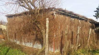 The Most beautiful hut brooms of Castiglion Fibocchi (La più bella capanna di Castiglion Fibocchi Cappannelle)