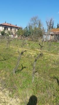 The old vineyard and the house Bianchi