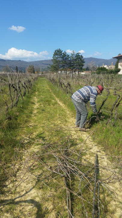 Renato in the vineyard