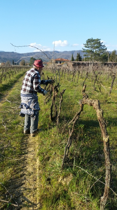 Step 1 We begin to cut the old vine plants - March 2016 - Cappannelle - Castiglion Fibocchi