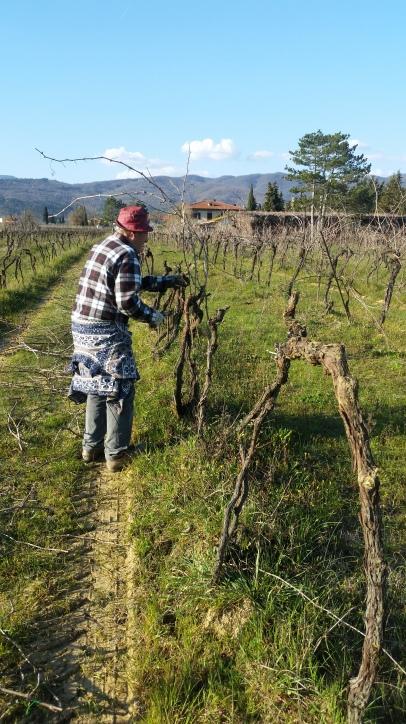 Step 1 We begin to cut the old vine plants - March 2016 - Cappannelle - Castiglion Fibocchi