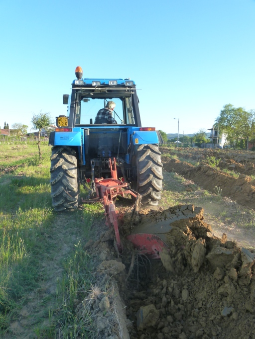 Step 3 Remove the plant vines with tractor - May 2016 - Cappannelle - Castiglion Fibocchi