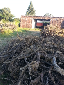 Large Pile of roots