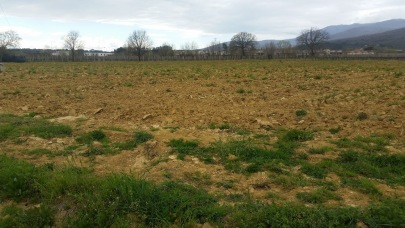 Plowed land before planting the vineyard -