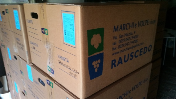 Boxes of Marchi & Volpe