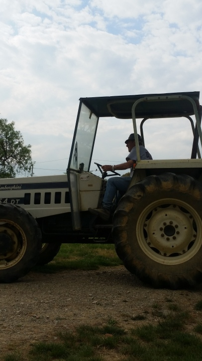 Renato in the tractor