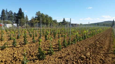 Proud about our new vineyard in Cappannelle