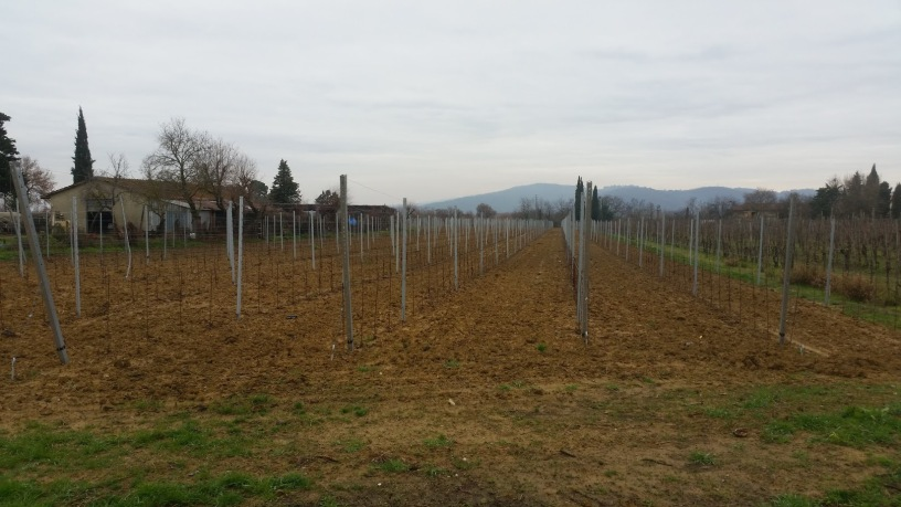 Vineyard is sleeping in Cappannelle - 31 December 2017