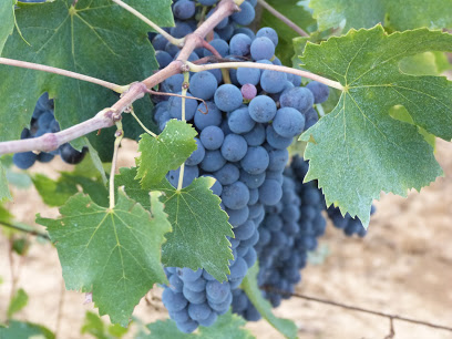 Grapes in the Harvest 2015