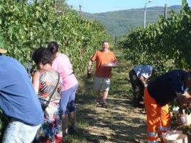 Harvest 2015!